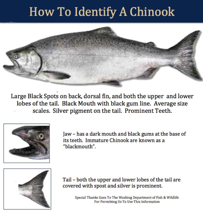 Chinook II identifier